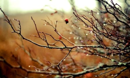 nature-autumn-season-rain-branches-drops-800x600-wallpaper