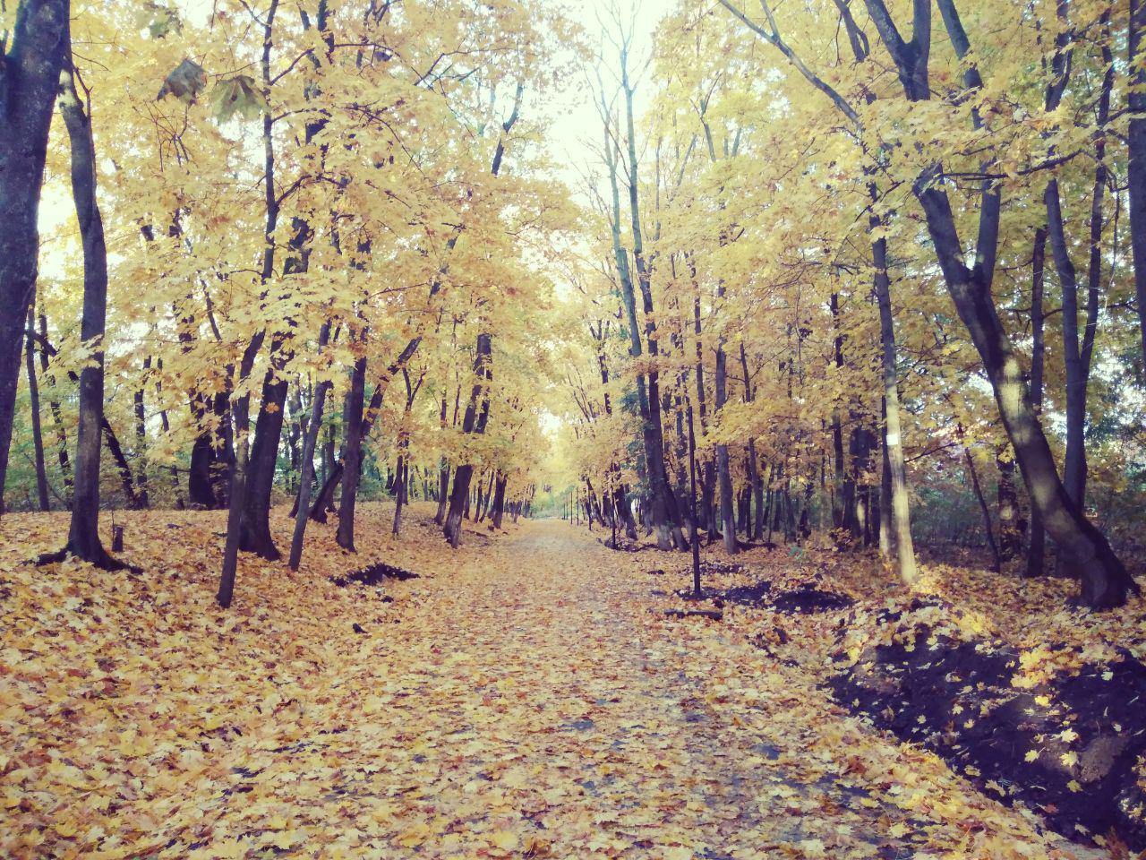 ботаника, осень