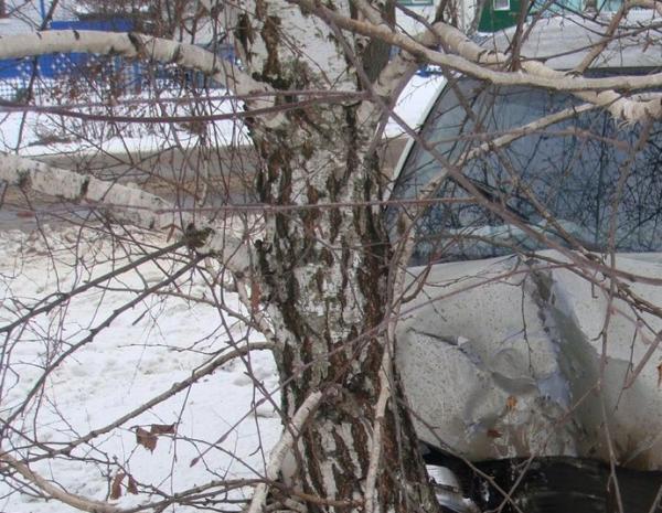 ДТП, дерево