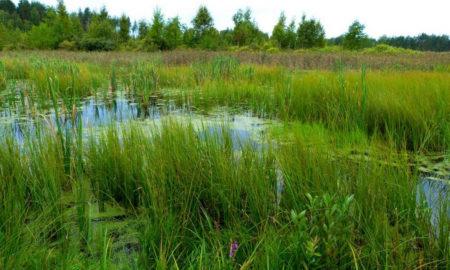полесье болото