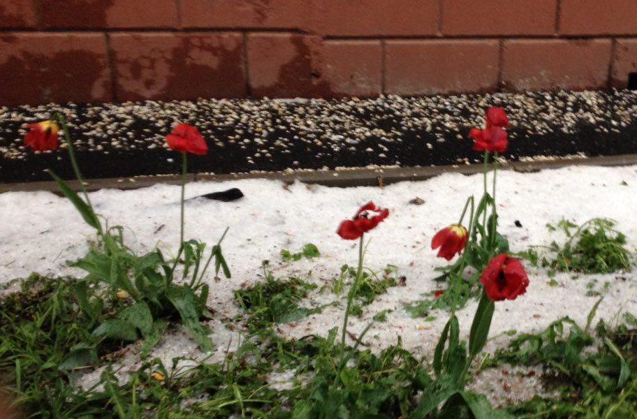 град и тюльпаны