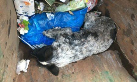 собака в мусорке