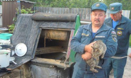 котя в колодце