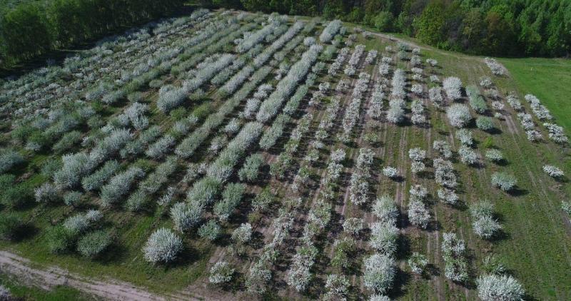 Орелстрой, вид, сад