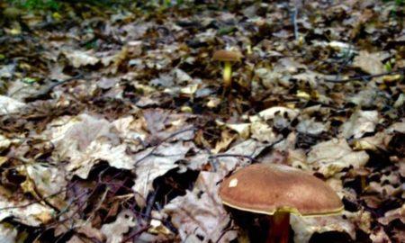 гриб, осень