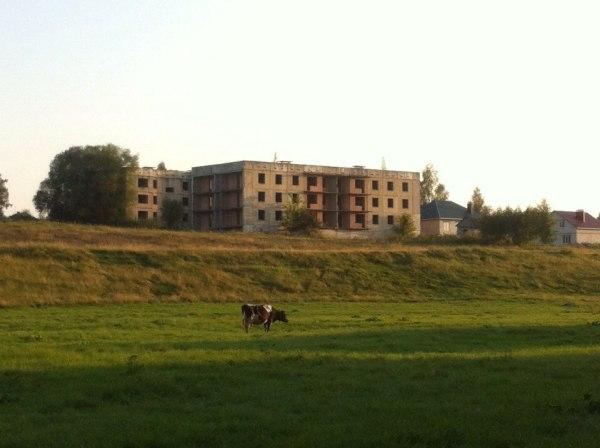 корова, многоэтажка, заброшенный дом