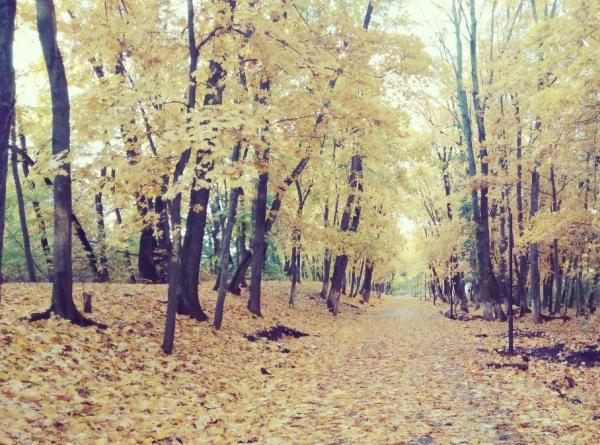 погода, осень, ботаника