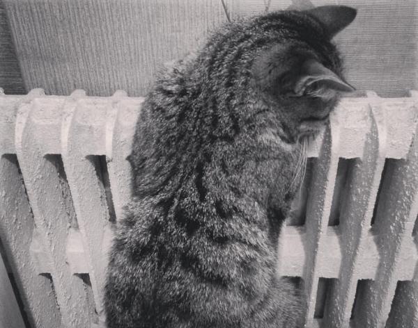 кот, тепло, батарея, отопительный сезон