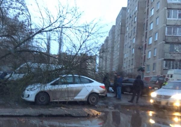 дерево на машины