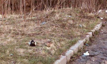утки, мусор