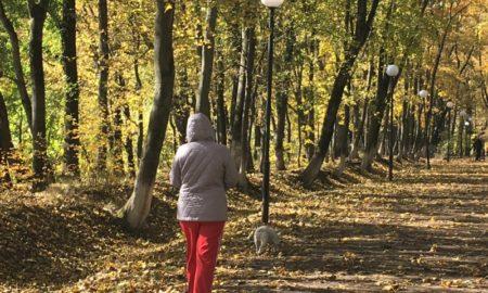 осень, выгул собак, собака