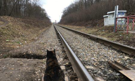 железнодорожные пути, кот, рельсы
