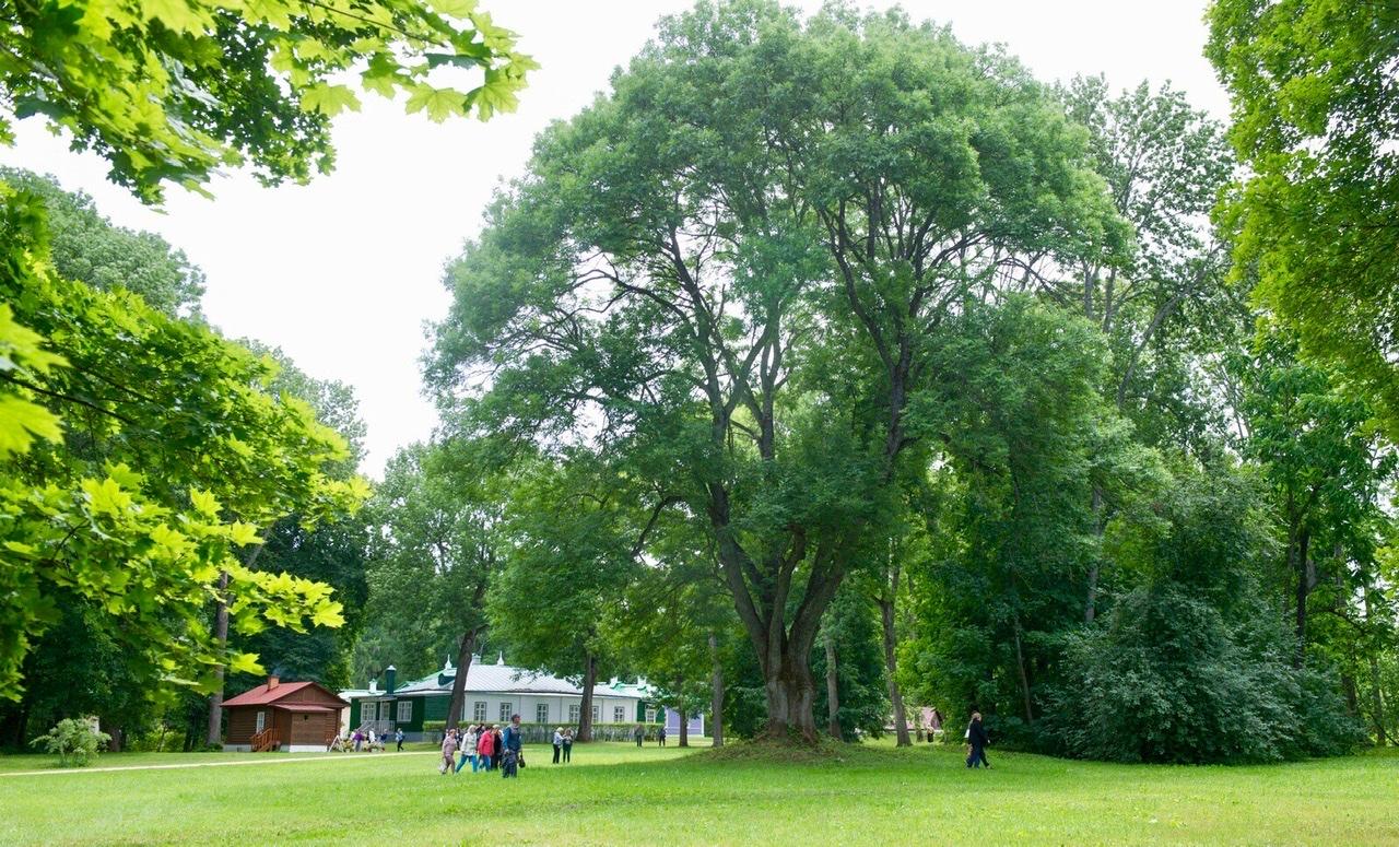 спасское лутовиново, дуб, музей усадьба