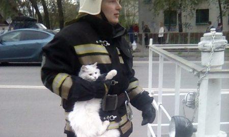 спасатели, кот