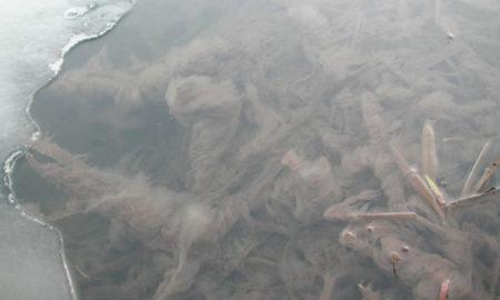 река сосна, слизь, загрязнение реки