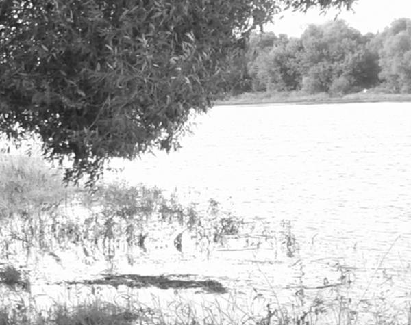 река, Сосна, утонул, тело, утопленник