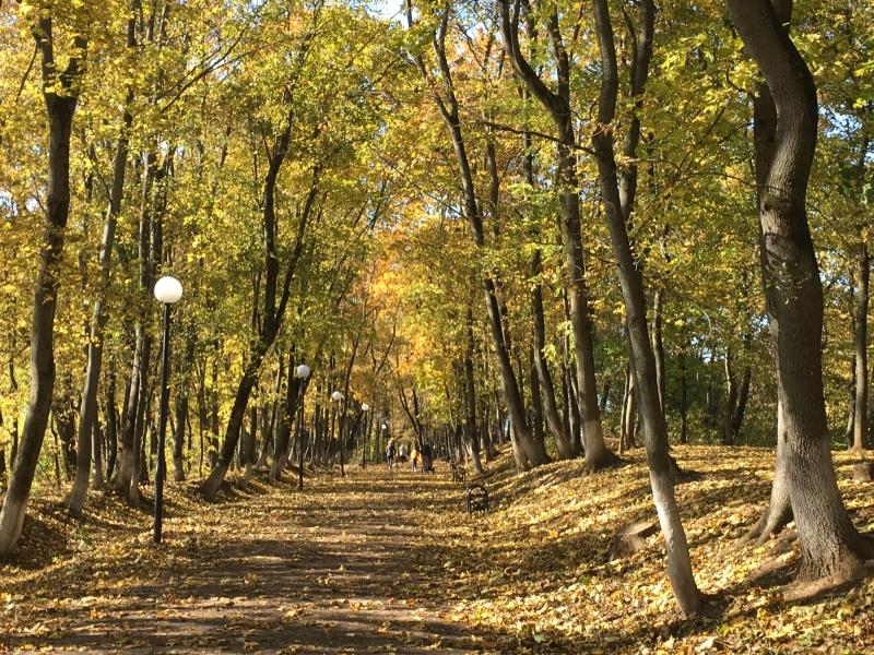 осень, погода, ботаника, благоустройство