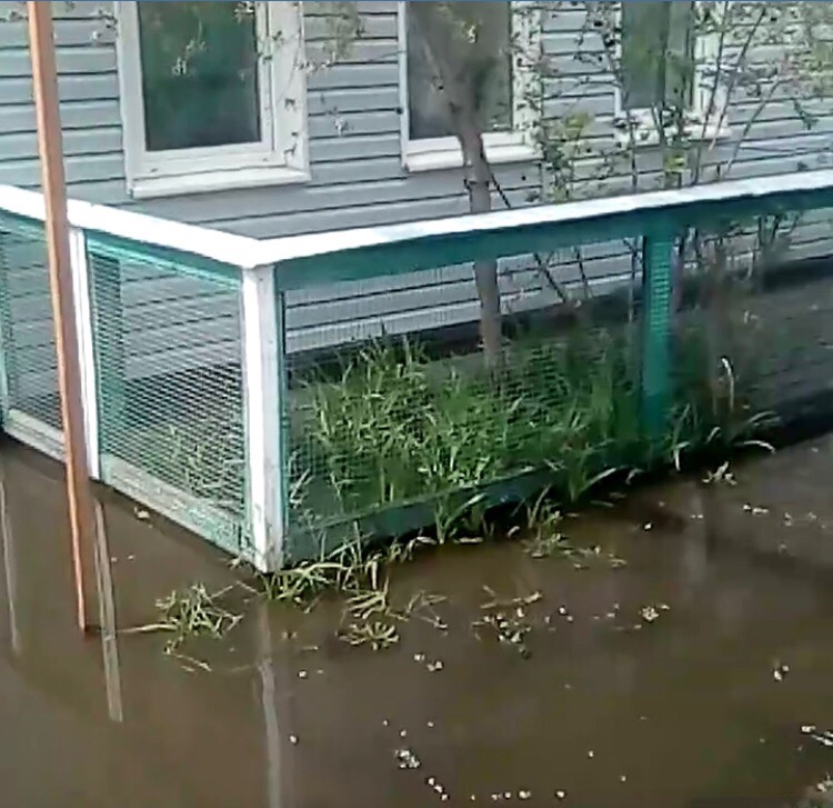 затопило дом