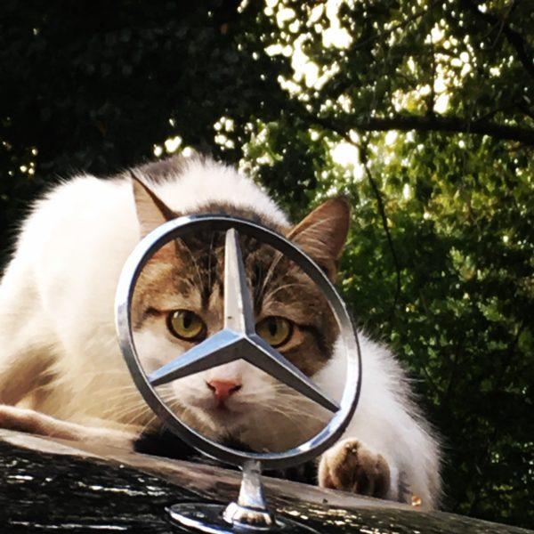 кот, кошка, мерседес