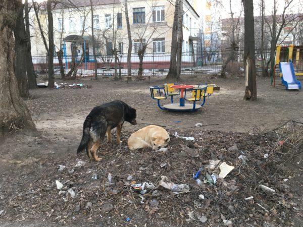бродячие собаки, дворняги, собака, бездобные, животные