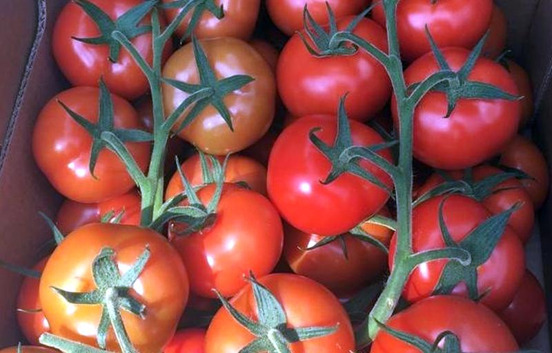 помидоры, томаты, теплица