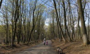 Погода, ботаника, семья, ребёнок, прогулка, парк, весна